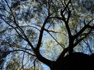 Foto: Lucas.Gc - Galhos de árvore.